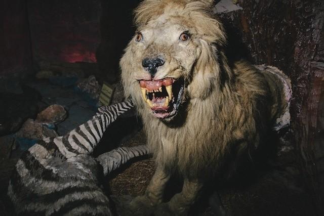 palestinian-taxidermists-stuffed-animal-zoo