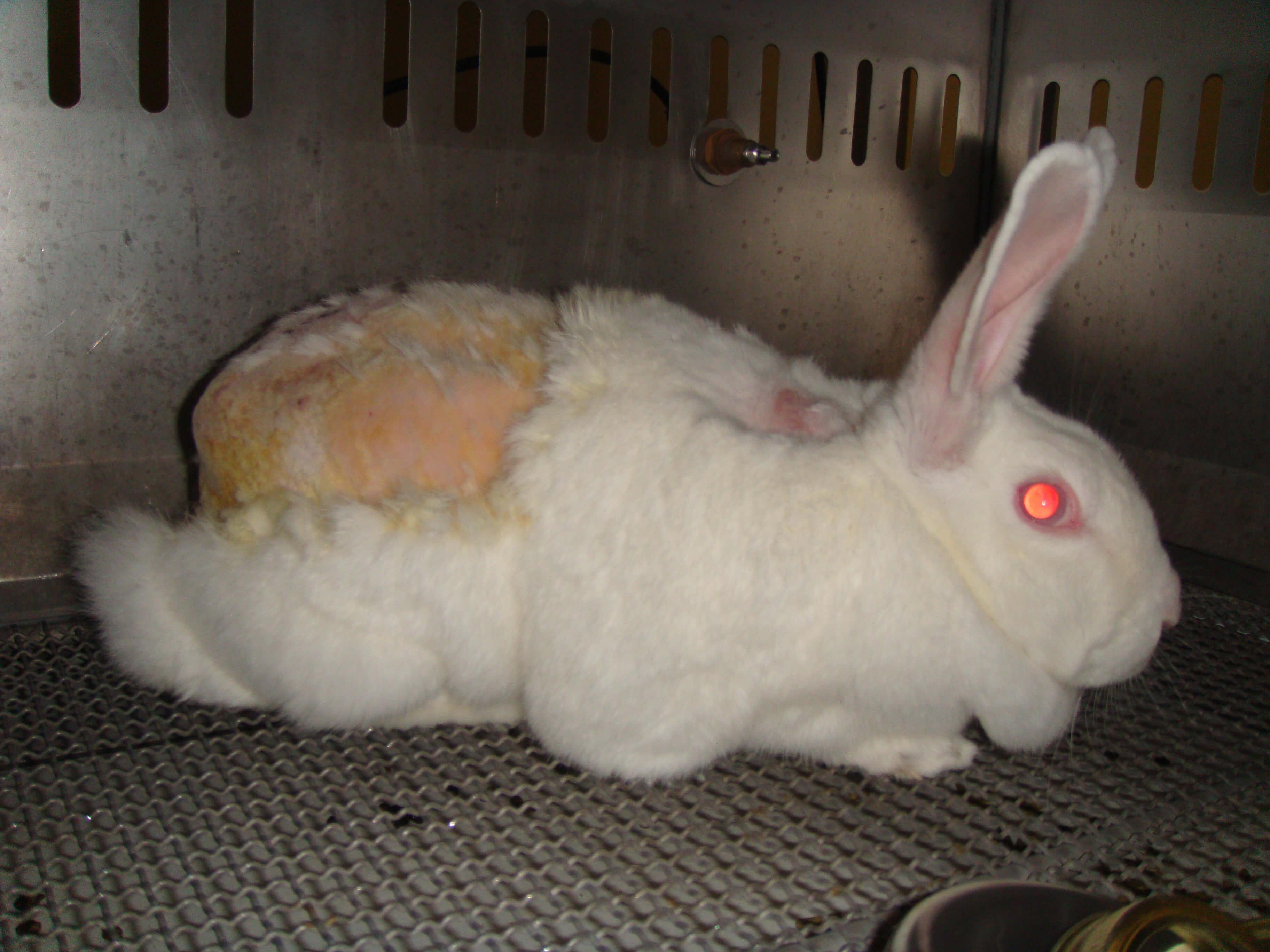πιραματα σε ζώα καλλυντικα cruelty free