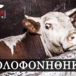 Τα δικαιώματα των ζώων & οι πολιτικές προστασίας τους