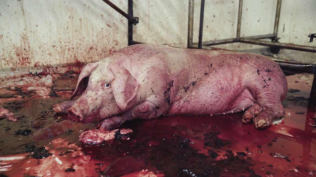 i-pseudaisthisi-tis-autodiathesis-den-tha-mou-upagoreusei-kaneis-ti-tha-fao-credits-Igualdad Animal-Animal Equality