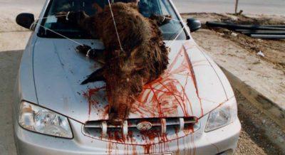 το κυνηγι ειναι δολοφονία